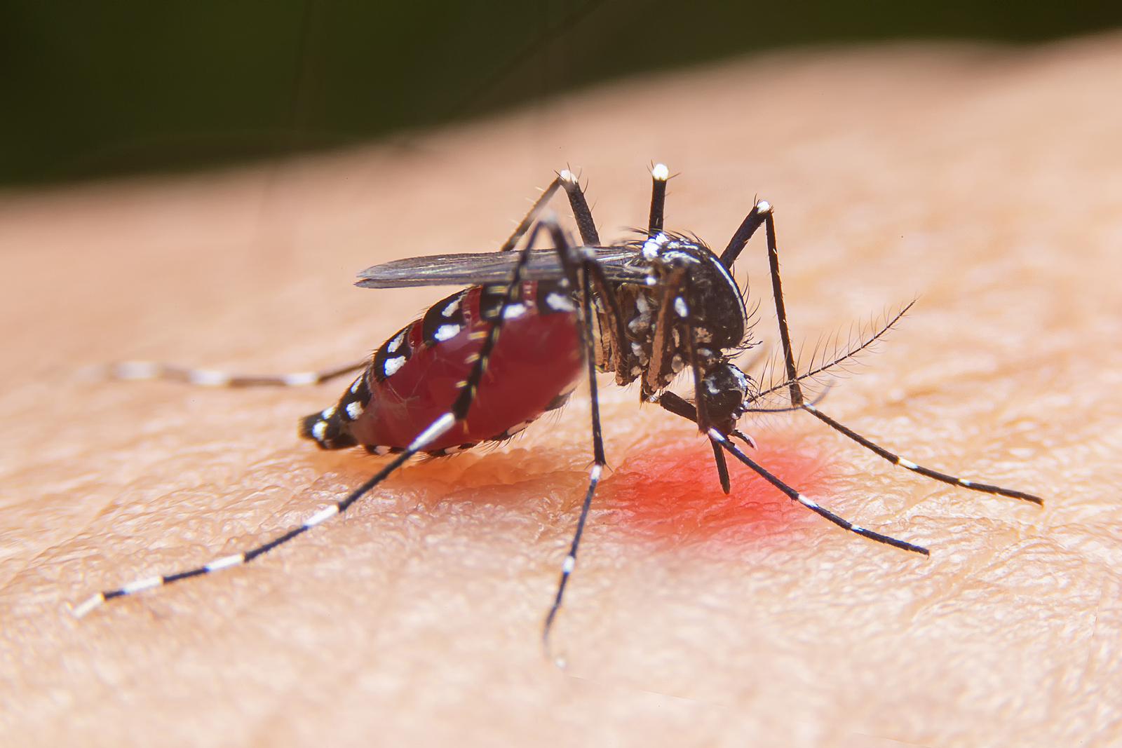 Pest Control Center Exterminator Sacramento Roseville CA